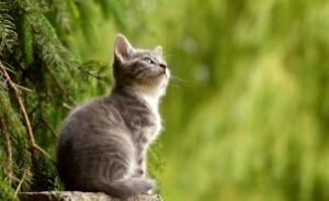 cat-2083492_1920