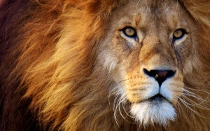 lion-3049884_1920