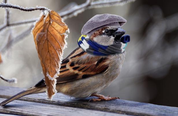 sparrow-2797009_1920.jpg